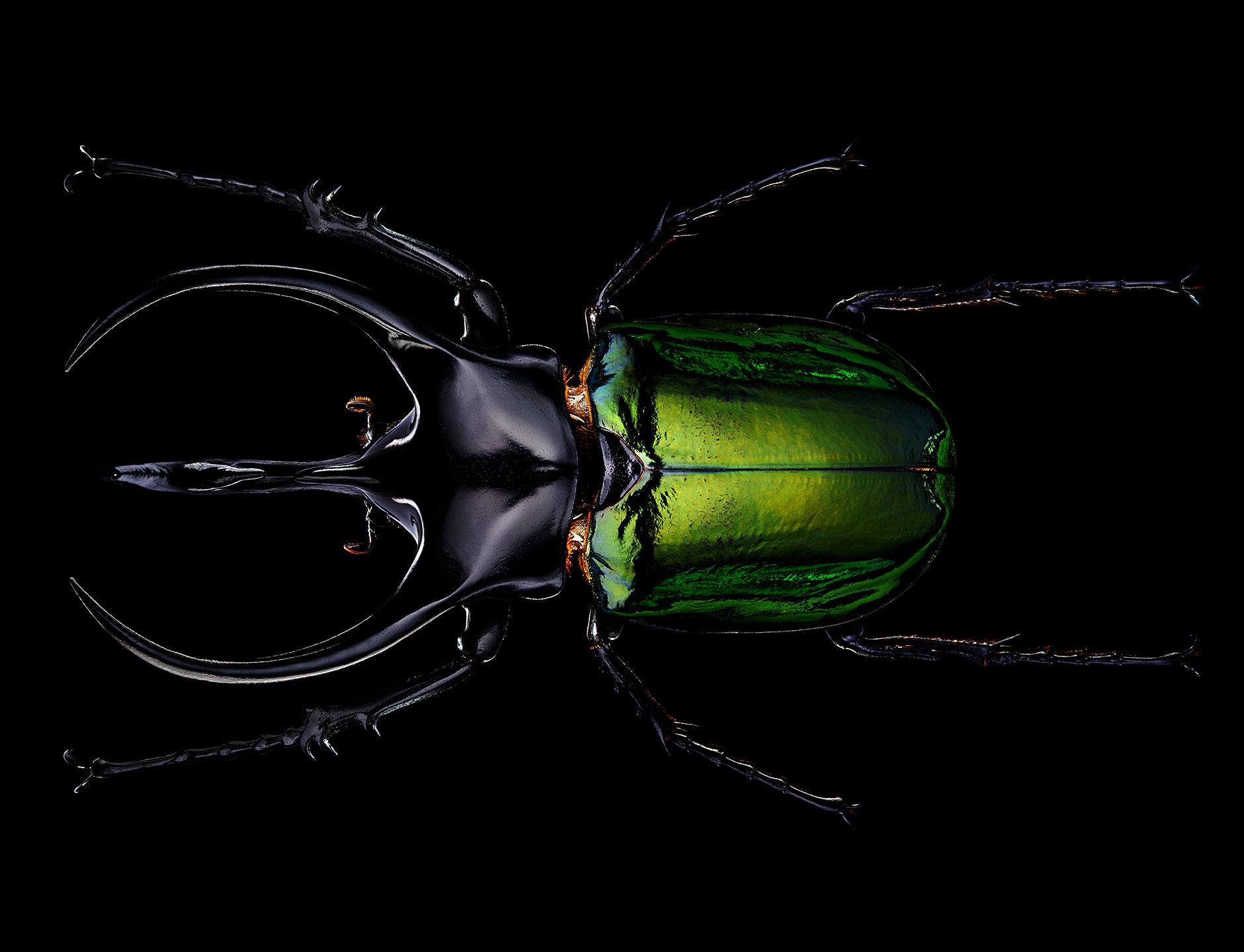 "<a href=""//mrsteel.london/shop/atlas-beetle/"">REVEAL DETAILS / BUY</a>"