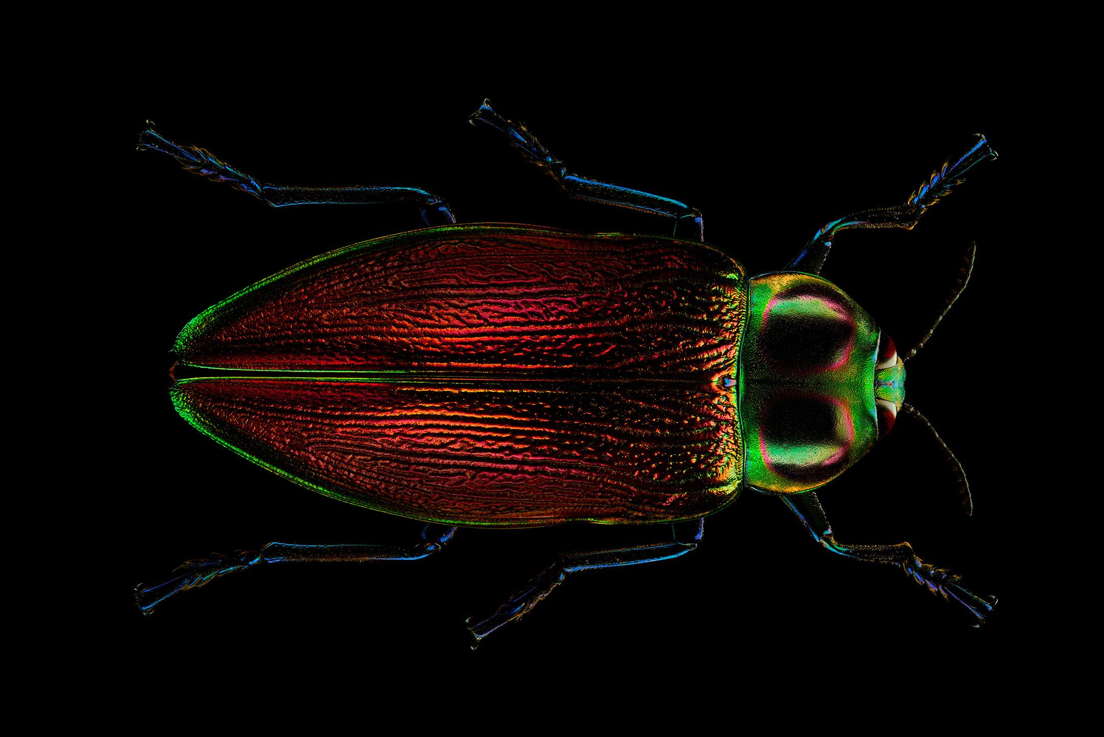 "<a href=""//mrsteel.london/shop/jewel-beetle/"">REVEAL DETAILS / BUY</a>"