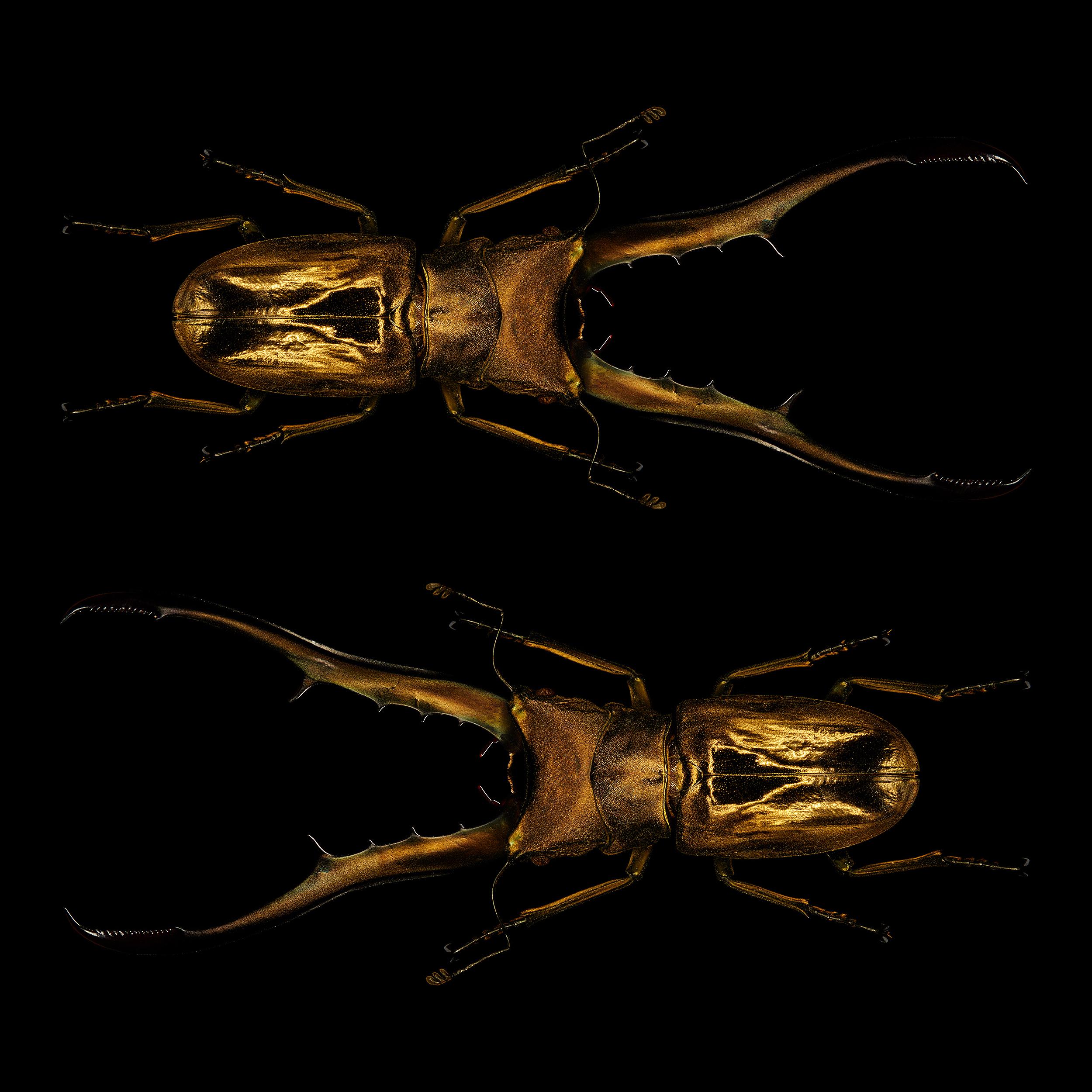 "<a href=""//mrsteel.london/shop/cyclommatus-metallifier-pair/"">REVEAL DETAILS / BUY</a>"