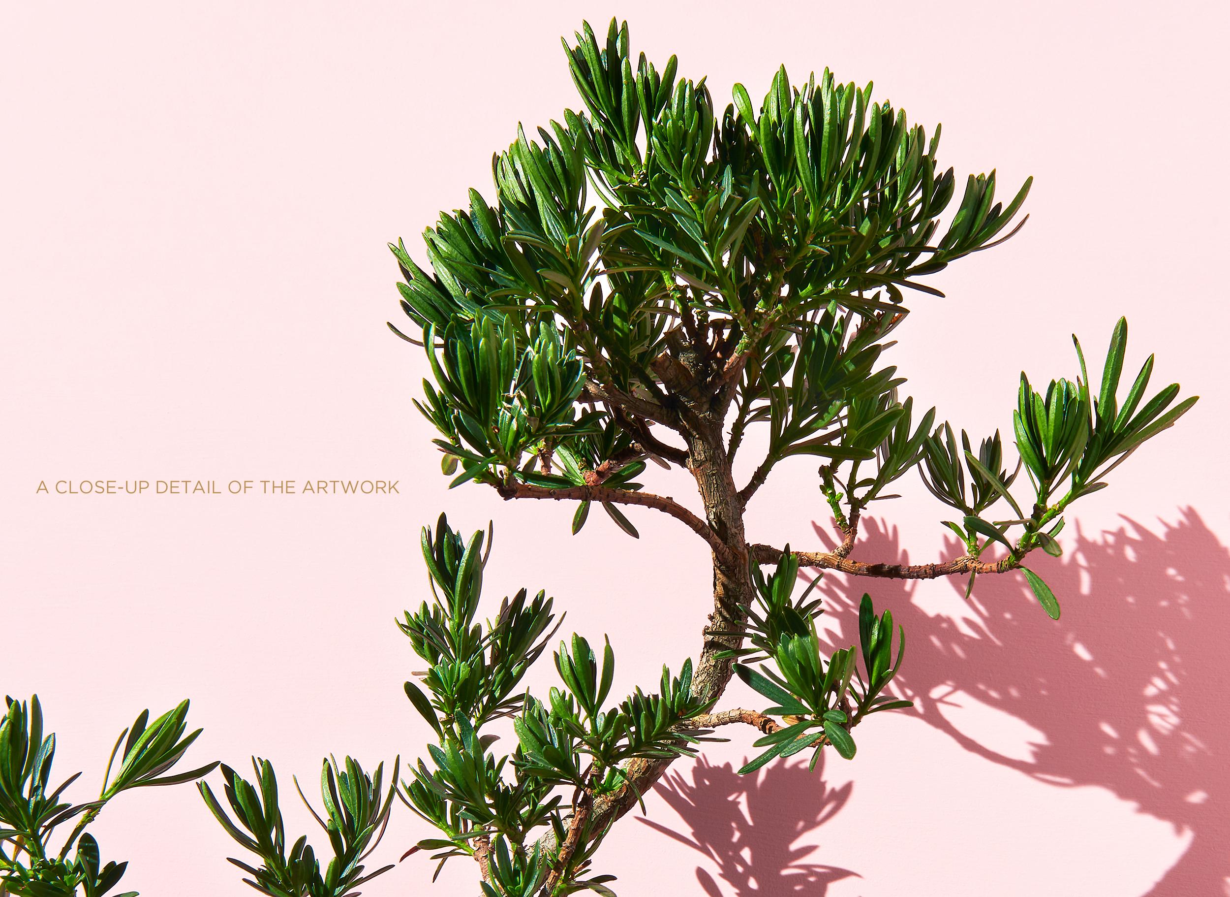 """<a href=""""https://mrsteel.london/shop/bonsai-on-pink-iii/"""">REVEAL DETAILS / BUY</a>"""