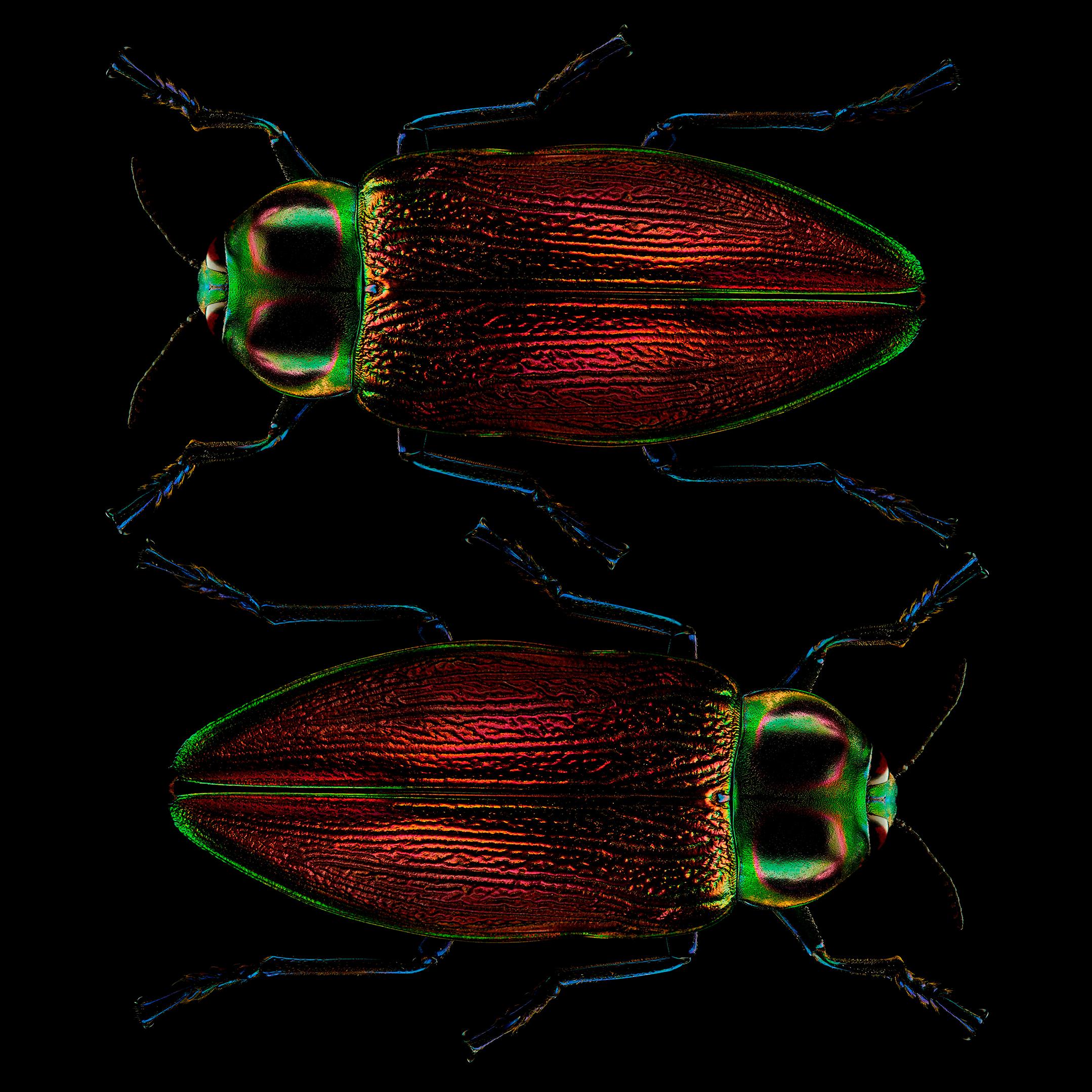 """<a href=""""//mrsteel.london/shop/giant-metallic-wood-boring-beetles-pair-by-mr-steel"""">REVEAL DETAILS / BUY</a>"""